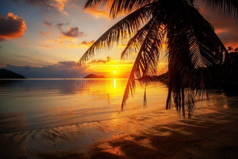 Schöner heller bunter erstaunlicher Sonnenuntergang auf einem tropischen Strand an stockfotos