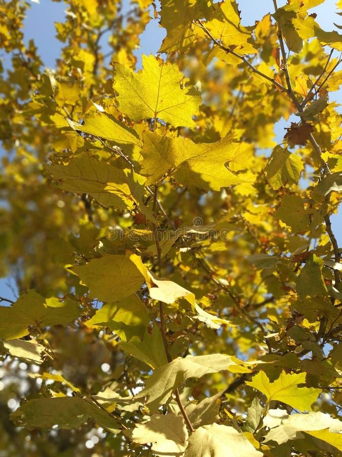 Schöner Herbst, fruchtbar lizenzfreie stockbilder