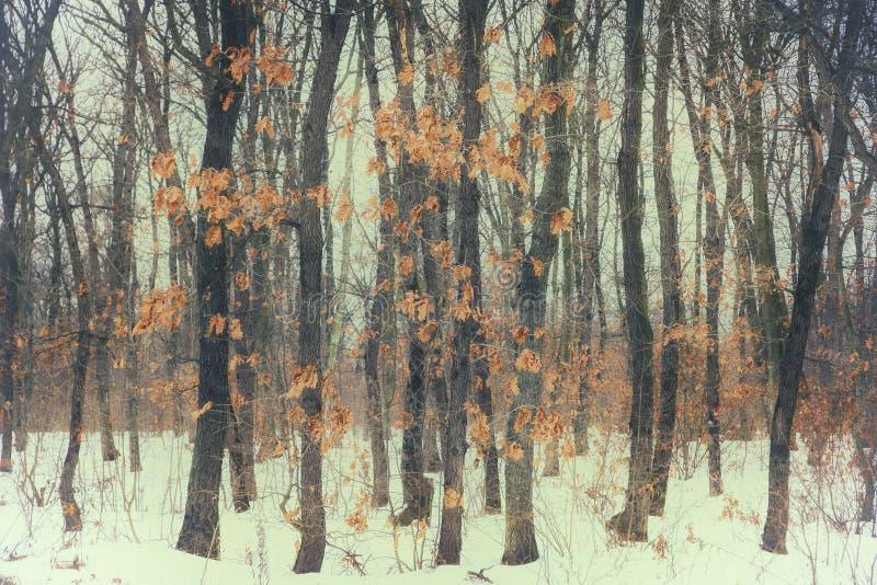 Schöner Herbstlaub im Wald im Winter stockbild