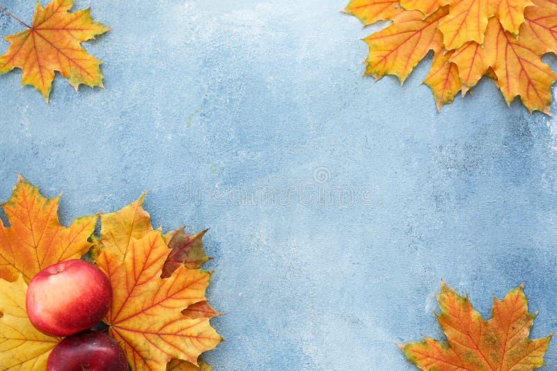 Schöner Herbstlaub mit Äpfeln auf Farbhintergrund lizenzfreie stockfotos