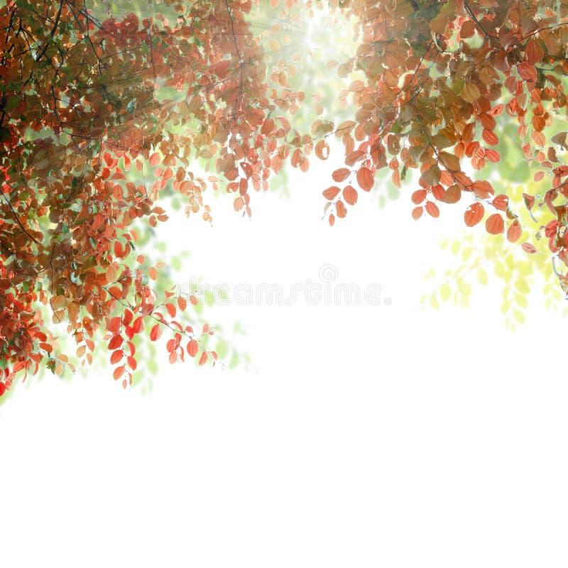 Schöner Herbstlaubrahmen mit dem Sonnenlicht lokalisiert auf weißem b lizenzfreie abbildung