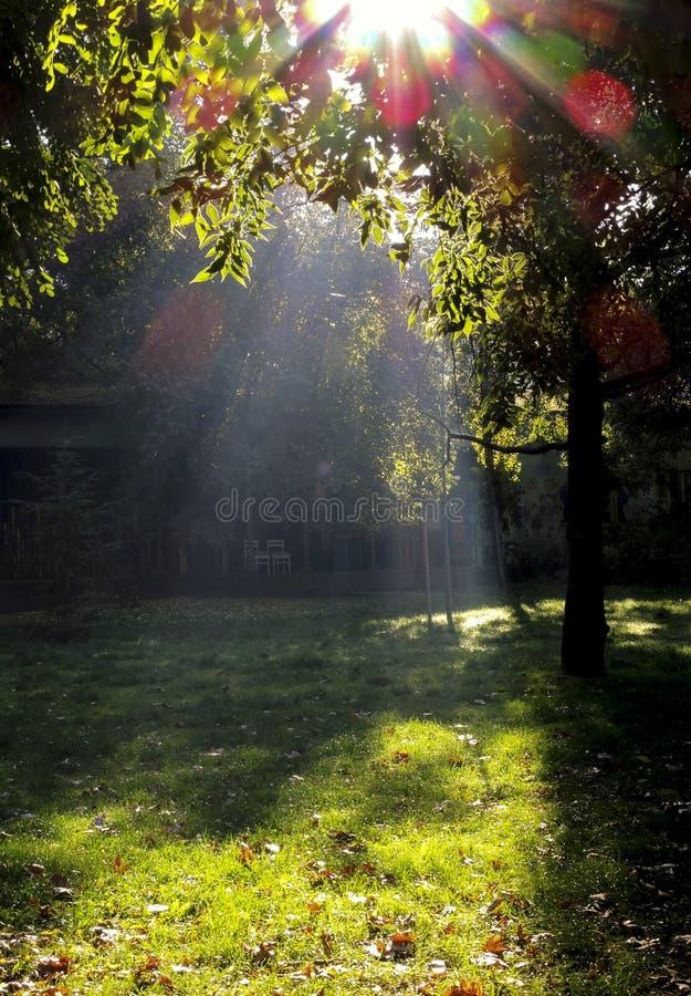Schöner herbstlicher Park im Sonnenlicht lizenzfreie stockbilder