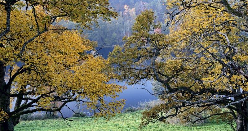 Schöner Herbstpark stockfotos