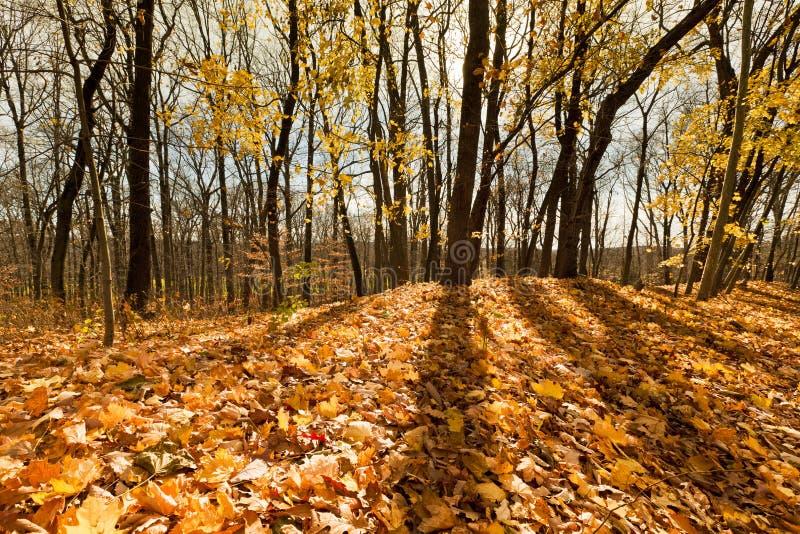 Schöner Herbsttag im Wald lizenzfreies stockfoto