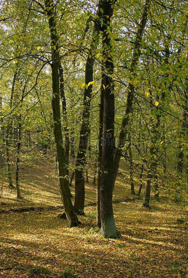 Schöner Herbstwald stockbilder