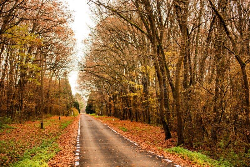 Schöner Herbstweg im Wald stockfotos
