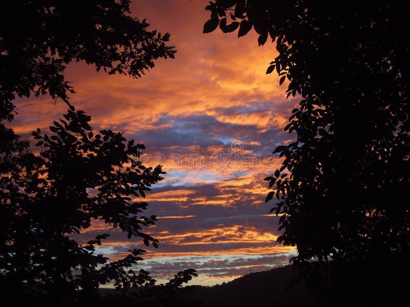 Schöner Himmel bei Sonnenuntergang zwischen den Bäumen stockbilder