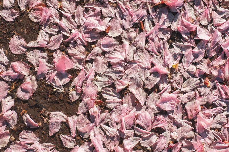 schöner Hintergrund blüht Frühlingsweichheitsbeschaffenheit stockfotos