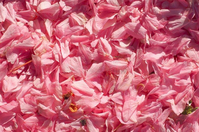 schöner Hintergrund blüht Frühlingsweichheitsbeschaffenheit lizenzfreie stockfotografie