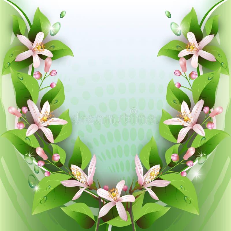 Download Schöner Hintergrund Mit Empfindlichen Blumen Vektor Abbildung - Illustration von garten, celebrate: 26371108