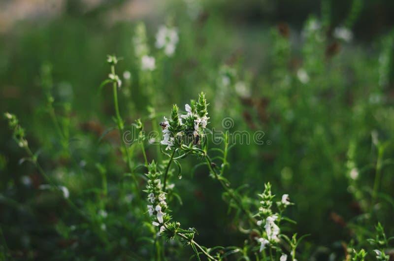 Schöner Hintergrund von wilden Kräutern und von Sonnenlicht der Blumen morgens Helle Farben Weicher vorgew?hlter Fokus Sommerposi stockfotos