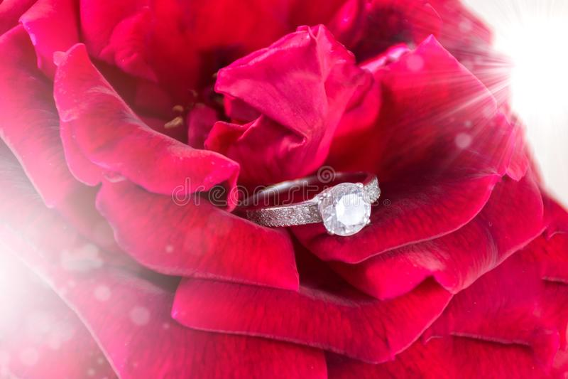 Schöner Hochzeitshintergrund mit Diamantverpflichtungsehering in der rosafarbenen Blume des roten Weiche stockfotos