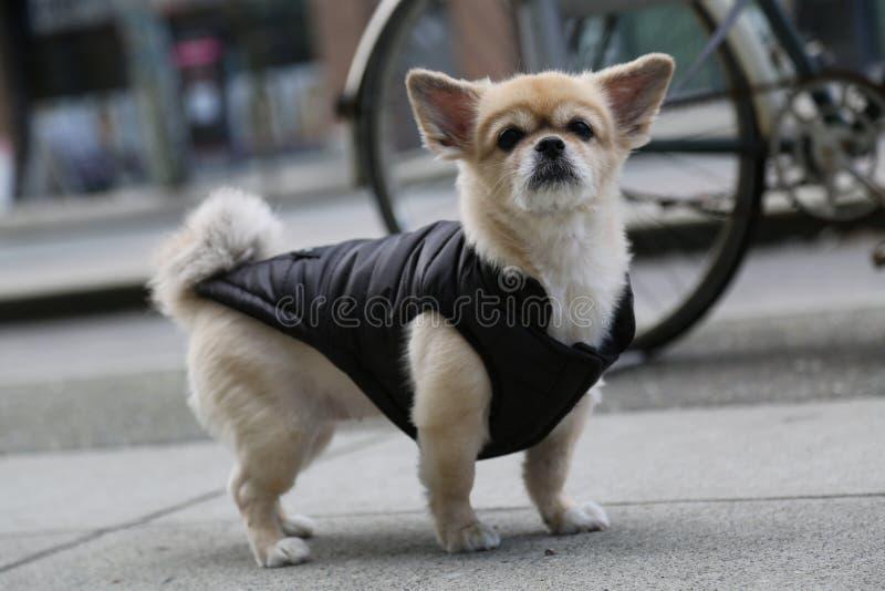 Schöner Hund kleidet Straße stockfotografie