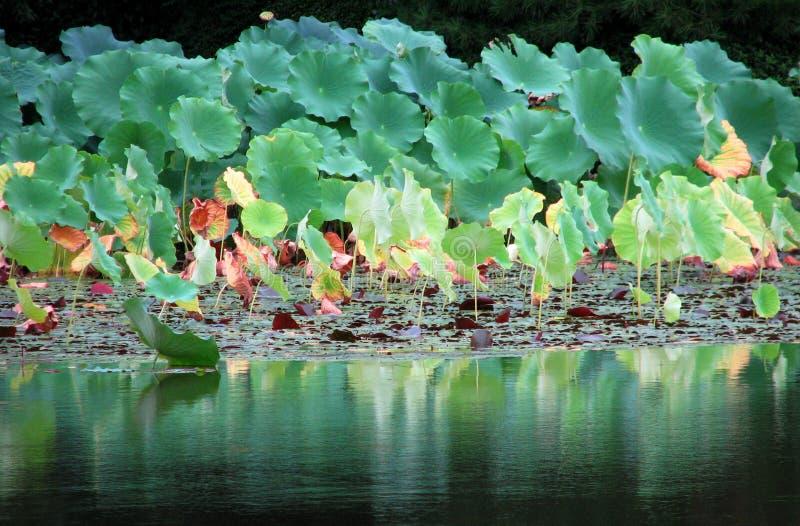 Schöner japanischer Garten in Kyoto Japan lizenzfreie stockfotografie