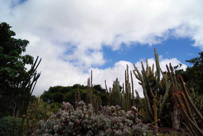 Schöner Kaktus in einem Gartenhimmelhintergrund lizenzfreies stockfoto