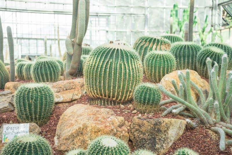 Schöner Kaktus und die Felsen lizenzfreies stockbild