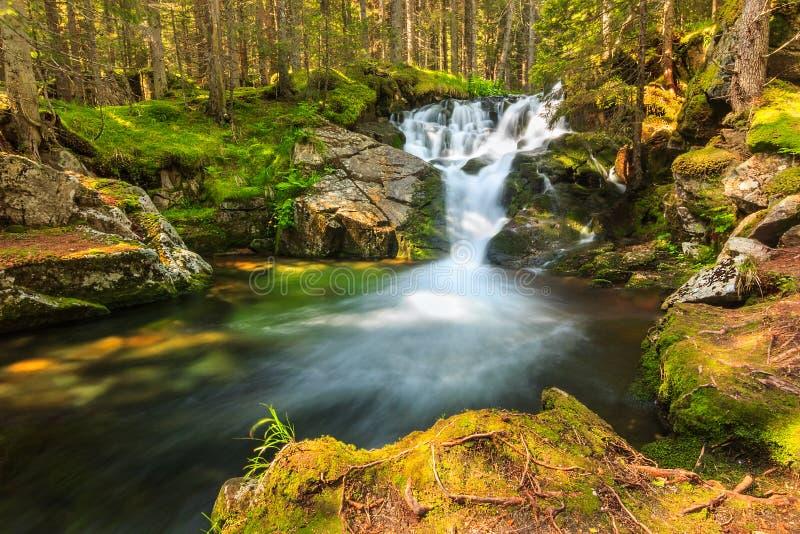 Schöner Kaskadenwasserfall im Wald, Nationalpark Retezat, Rumänien stockbilder
