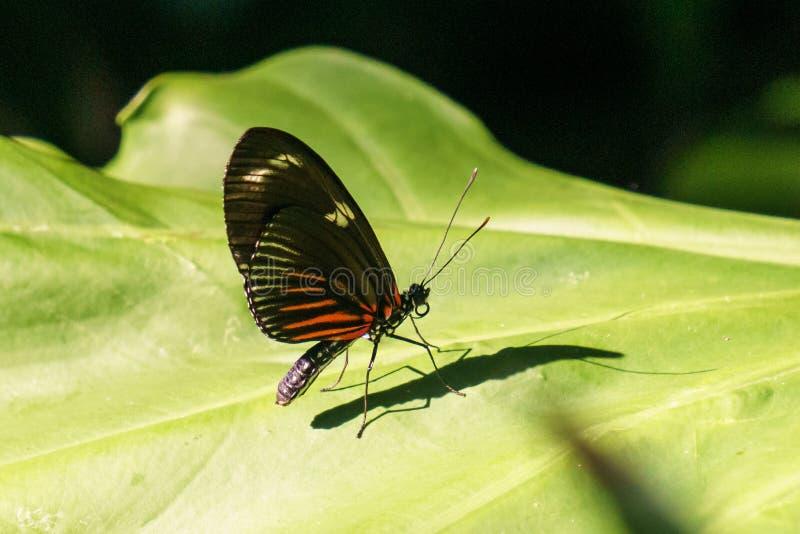 schöner kleiner Schmetterling mit hell farbigen Flügeln auf grünem Blatt stockfotos