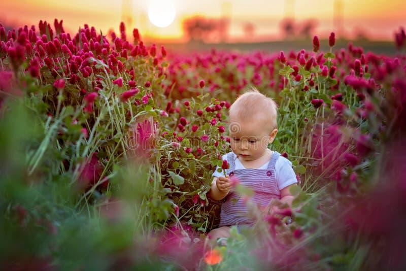 Schöner Kleinkindjunge auf dem herrlichen Inkarnatkleegebiet auf Sonnenuntergang stockbild