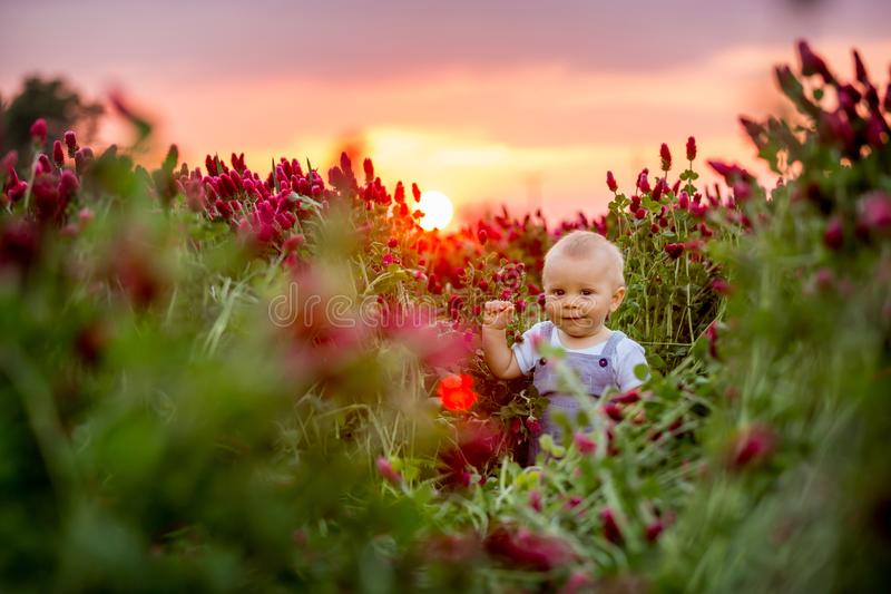 Schöner Kleinkindjunge auf dem herrlichen Inkarnatkleegebiet auf Sonnenuntergang lizenzfreie stockbilder