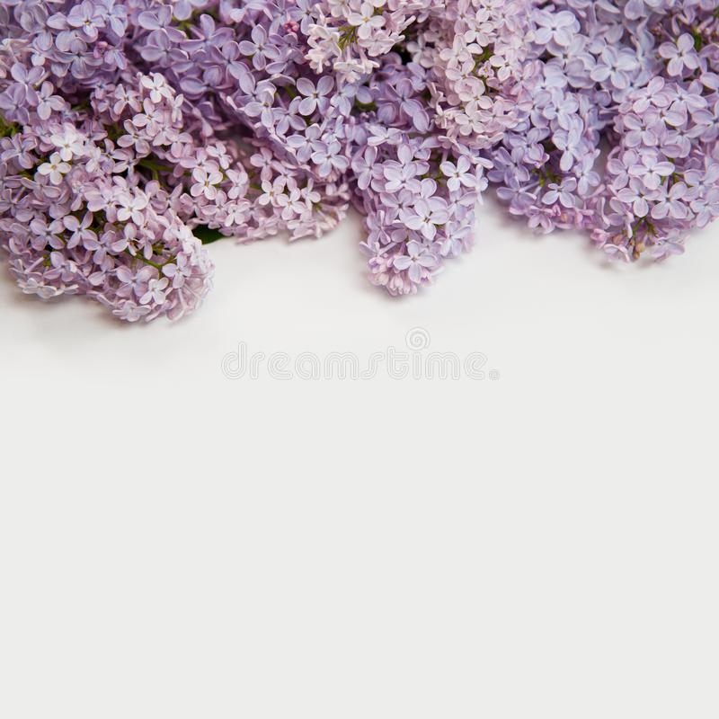 Schöner lila Hintergrund Nahaufnahmefoto lokalisiert auf weißem Hintergrund lizenzfreie stockfotos