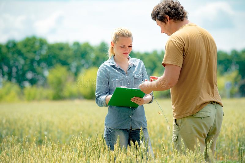 Schöner Mädchenagronom mit Anmerkungsbuchstellung auf dem Weizengebiet und dem Betrachten der Ernte im Landwirtmann-Hand-, Grünem lizenzfreie stockfotos