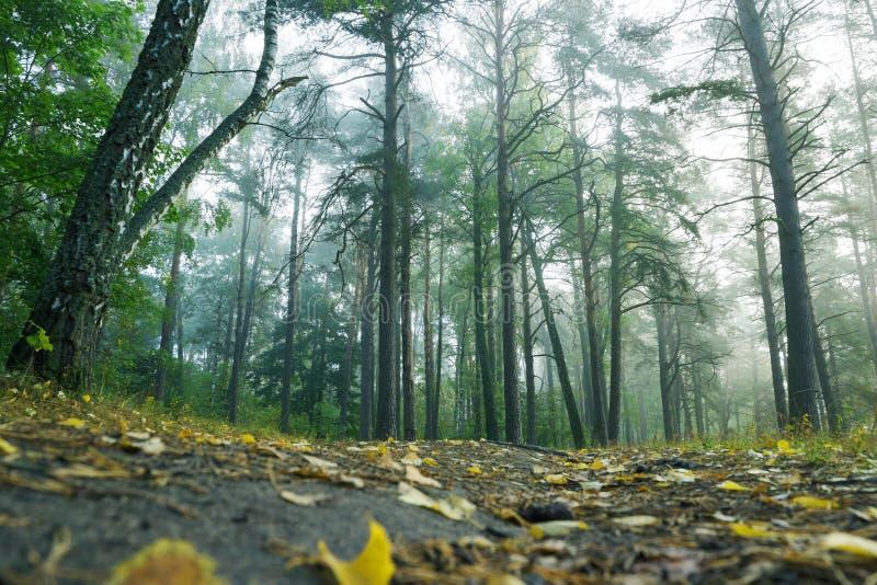 Schöner magischer Wald nach Regen lizenzfreie stockbilder