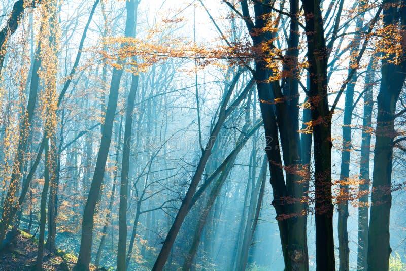 Schöner Morgen im nebelhaften Herbstpark mit Sonne strahlt aus Fall getont lizenzfreie stockfotos