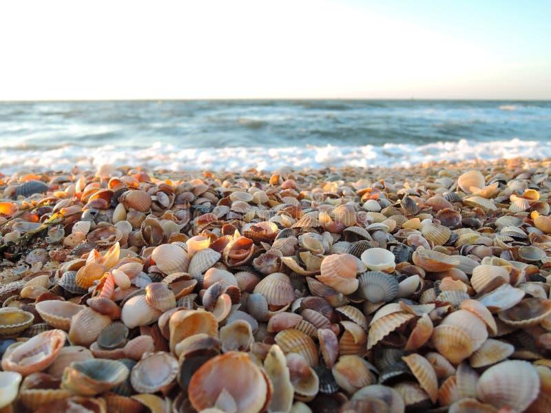 Schöner Muschelstrand bei Sonnenuntergang durch das Meer lizenzfreies stockfoto