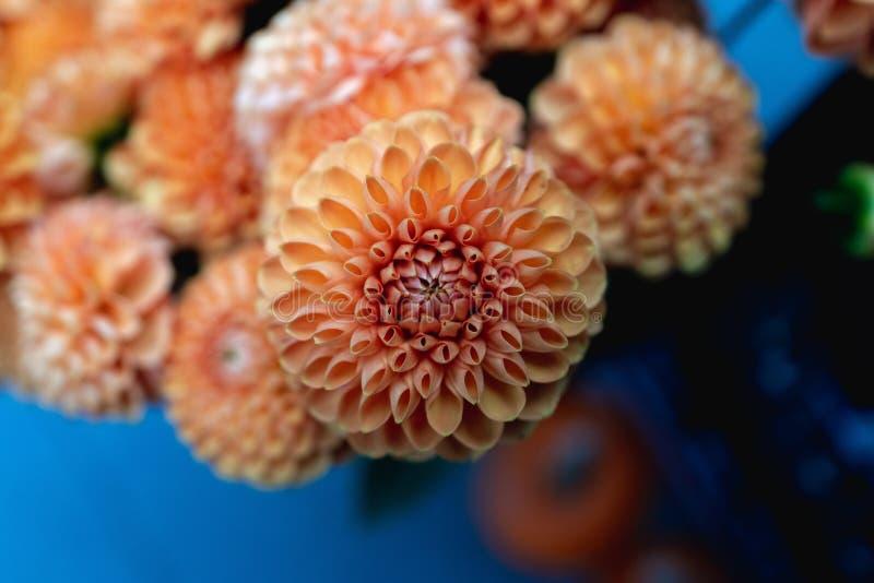Schöner Nahaufnahmeschuß der Dahlienblume lizenzfreies stockbild
