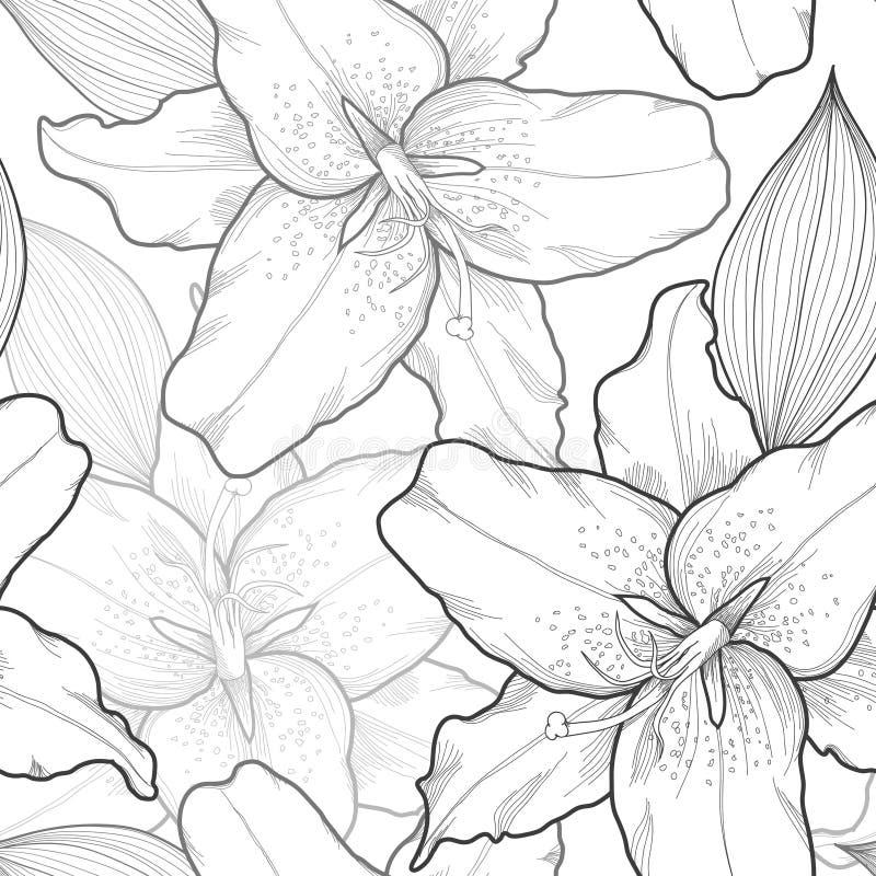 Schöner nahtloser Schwarzweiss-Hintergrund mit den Lilien, von Hand gezeichnet. vektor abbildung