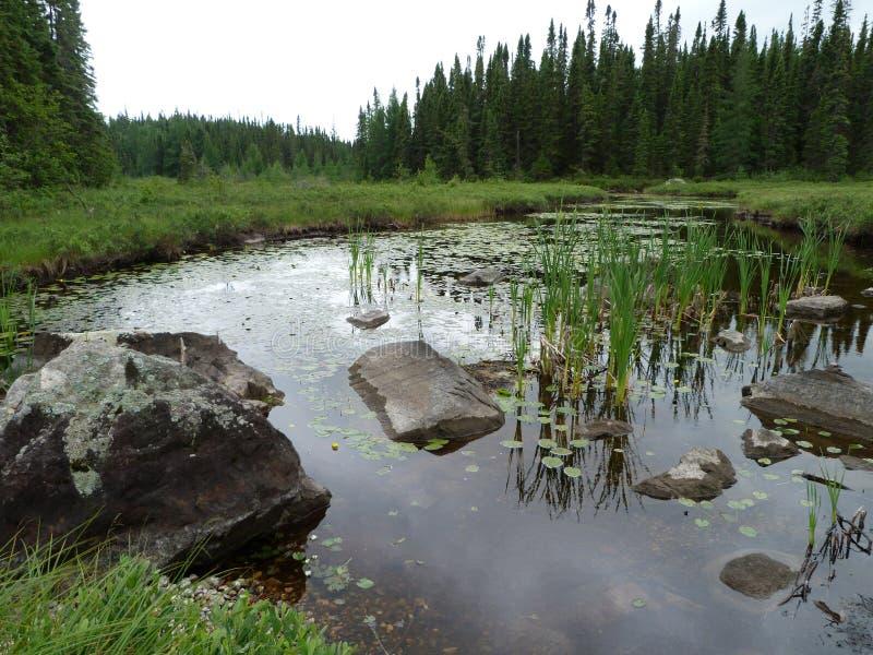 Schöner Nebenfluss und Wald an einem Sommertag nahe Wawa Ontario Kanada stockfoto