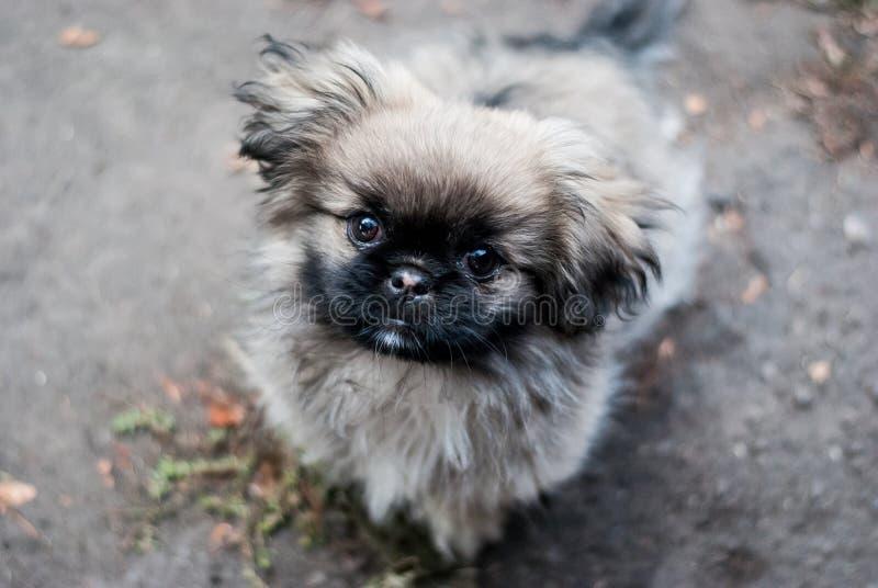 Schöner netter flaumiger Hund lizenzfreie stockfotografie