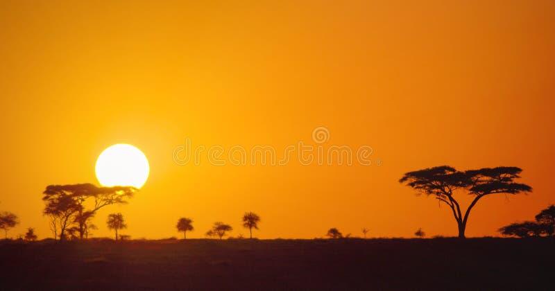 Schöner panoramischer afrikanischer Sonnenuntergang in den Serengeti-Park-Savannenebenen, Tansania, Afrika stockfotografie