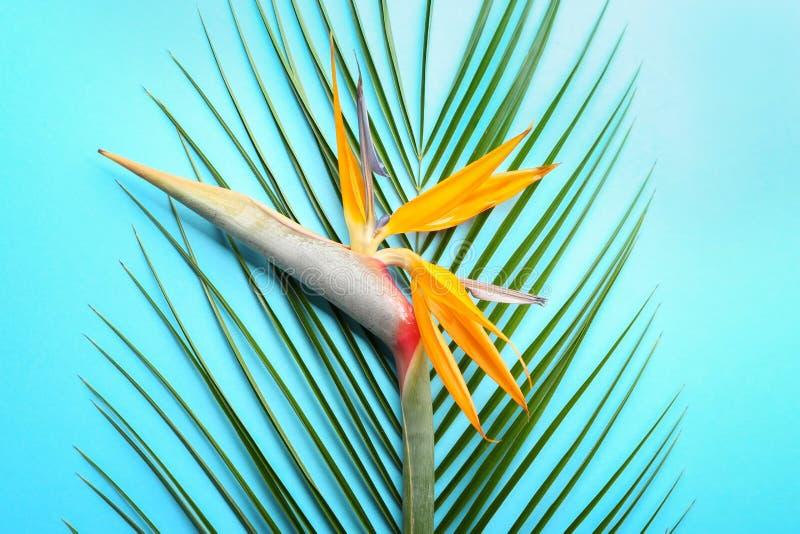 Schöner Paradiesvogel Blume und tropisches Blatt auf Farbhintergrund lizenzfreies stockfoto