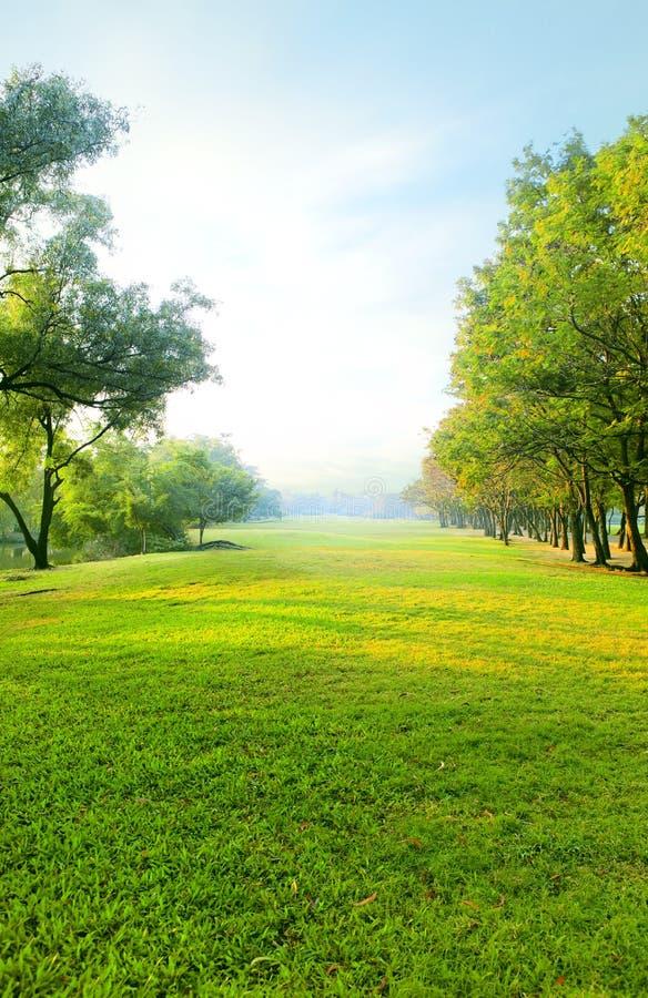 Schöner Park des Morgenlichtes öffentlich mit der grünen Rasenfläche stockbild