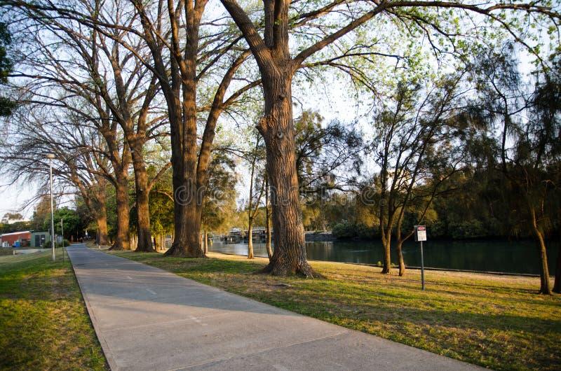 Schöner Park, große Bäume im warmen Licht der Sonnenuntergangzeit mit dem Fahrradweg lizenzfreies stockfoto