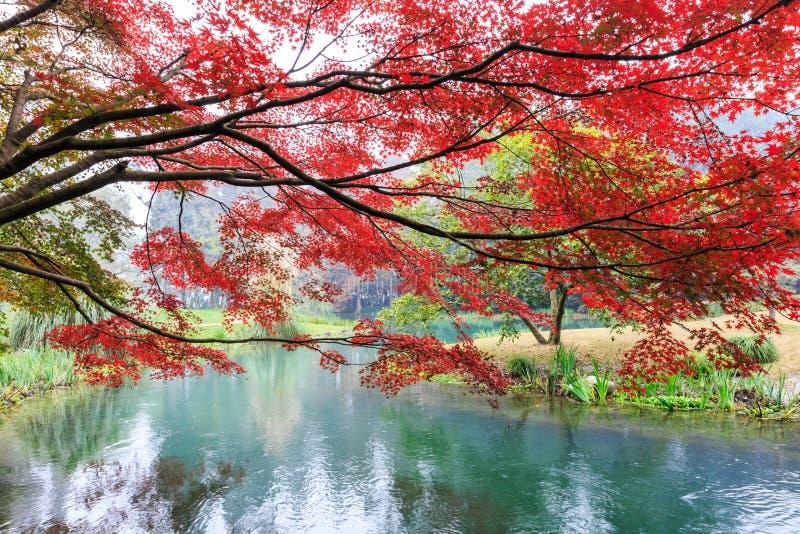 Schöner Park im Herbst lizenzfreie stockfotos