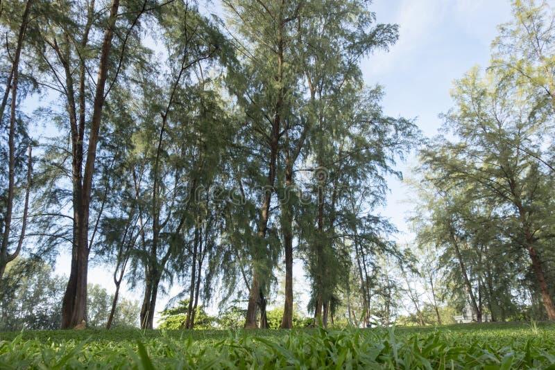 Schöner Park unter hellem Sonnenlicht grünes Gras und Seeeiche tre lizenzfreies stockfoto