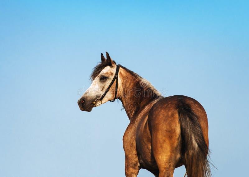 Schöner Pferdeportrait lizenzfreie stockbilder
