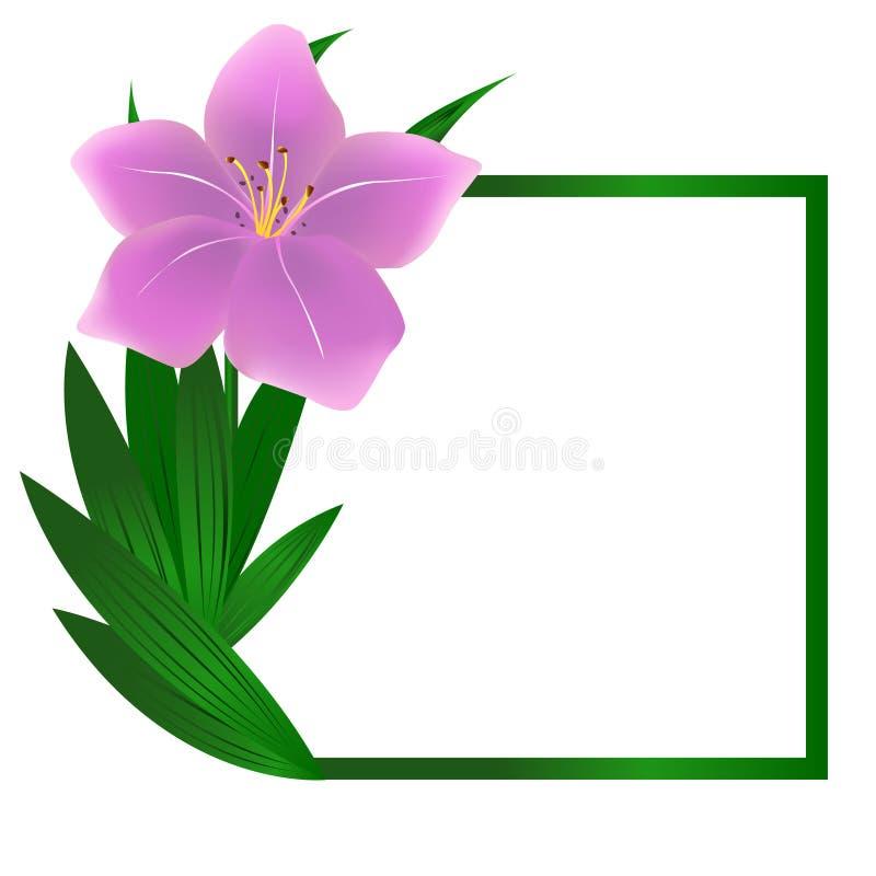 Schöner quadratischer Lilienblumenhintergrund lizenzfreie abbildung