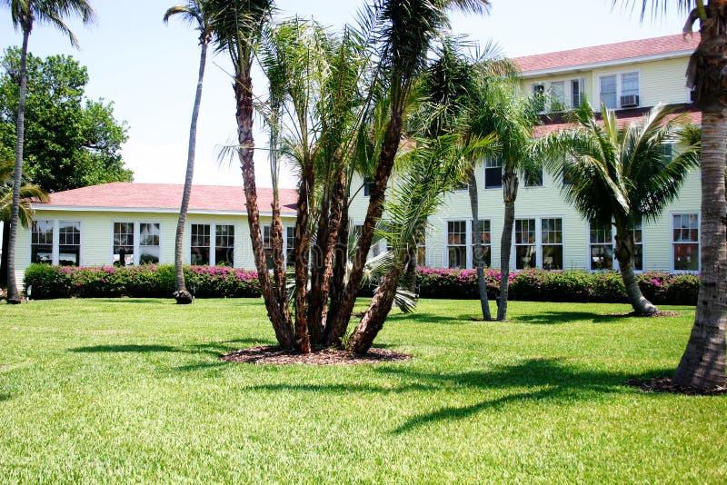 Schöner Rasen in den Tropen lizenzfreie stockfotos