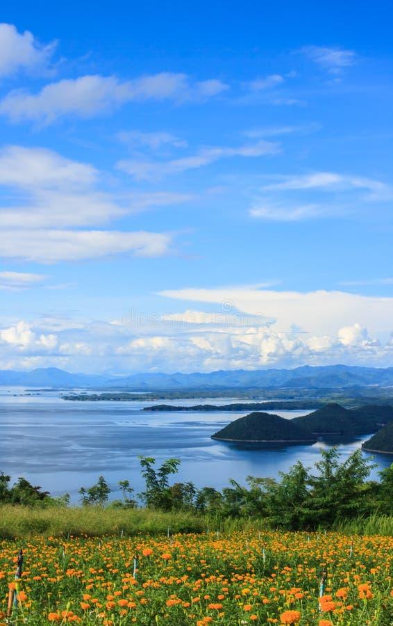 Schöner Ringelblumengarten vor blauer Srinakarin-Verdammung mit klarem blauem Himmel, Kanchanaburi-Provinz, Thailand lizenzfreie stockbilder