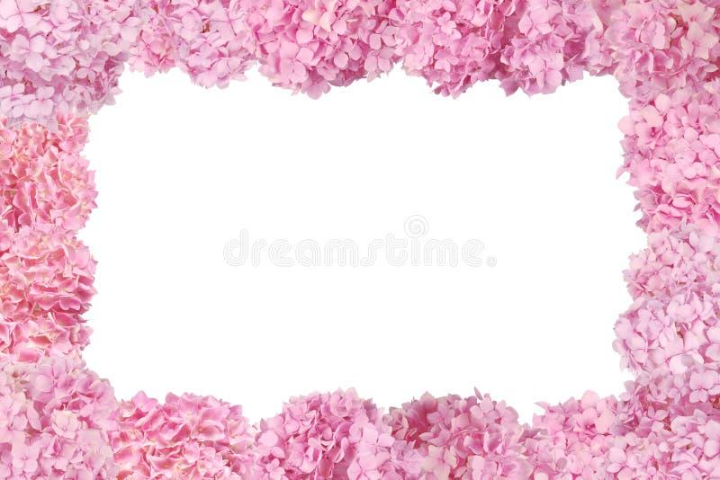 Schöner rosa Hortensieblumenrahmen lizenzfreies stockbild