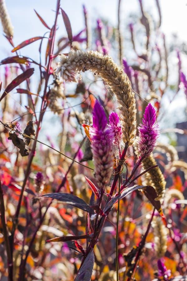 Schöner rosa Wildflower in einer Wiese stockfoto