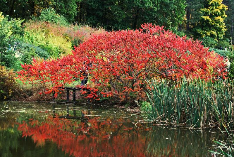 Schöner roter Busch stockbild