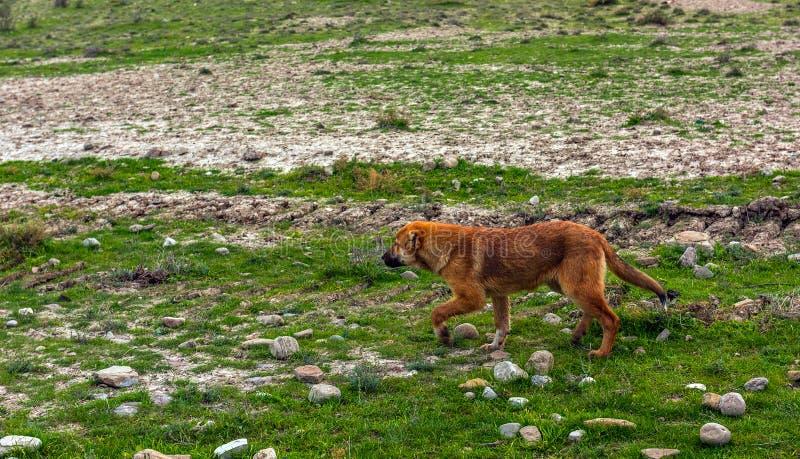 Schöner Schäferhund-Hund lizenzfreie stockbilder