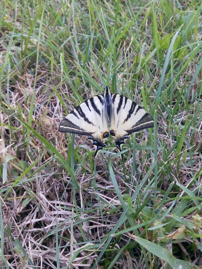 Schöner Schmetterling stockbild