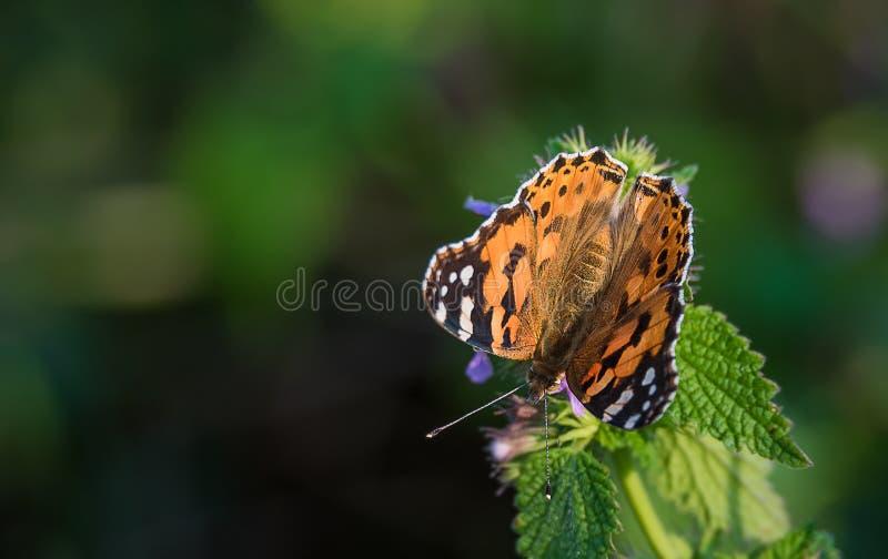 Schöner Schmetterling auf grünem Blatt lizenzfreie stockfotografie