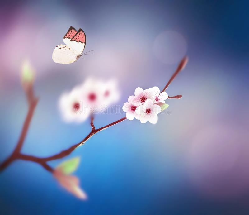Schöner Schmetterling auf weißer Blume, Himmelhintergrund stockfotografie